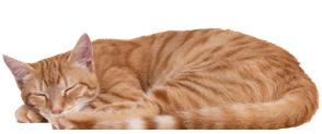 bookstore cat, Felinus bookstorius