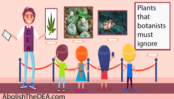 The drug war represents a superstitious way of thinking about plant substances, that they are either good or bad, whereas substances a morally neutral