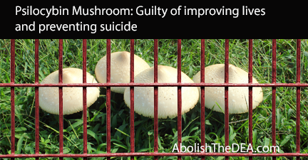 Psilocybin Mushroom: guilty of improving lives and preventing suicide.